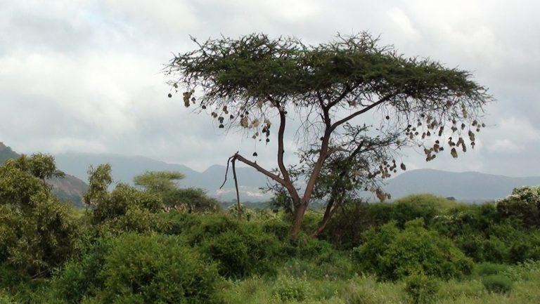 C.C. Monö in Africa